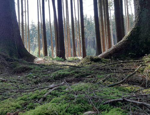 Der Wald ein Ort der Stille und Möglichkeiten